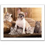Pintoo-H1567 Plastic Puzzle - Little Kittens and A Dog