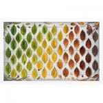 Pintoo-H2005 Plastic Puzzle - The Colorful Season of Leaves
