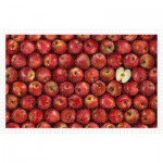 Pintoo-H2006 Plastic Puzzle - Fruits - Apple