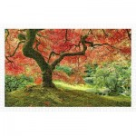 Puzzle   Japanese Garden in Portland