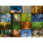 Grafika-Wood-00020 Wooden Jigsaw Puzzle - Collage - Trees