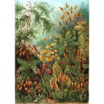 Puzzle-Michele-Wilson-A736-350 Wooden Puzzle - Ernst Haeckel