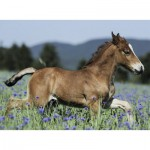 Puzzle  Ravensburger-10024 A Foal in the Meadow