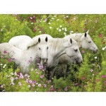 Puzzle  Ravensburger-13218 XXL Pieces - Horses on the Flower Meadow