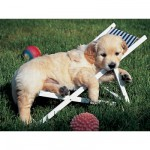 Ravensburger-14179 Jigsaw Puzzle - 500 Pieces - Golden Retriever : Just a Nap