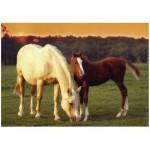 Puzzle  Ravensburger-14347 Pretty Horses
