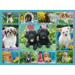 Puzzle  Ravensburger-14708 Collage - Dogs