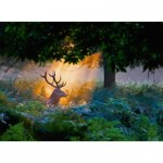 Puzzle  Ravensburger-14719 Nature Edition N°7 - Magical Light