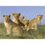 Puzzle  Ravensburger-14791 Lion's babies