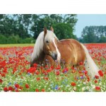 Puzzle  Ravensburger-14831 Horse in the Poppy Field