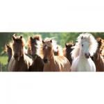 Puzzle  Ravensburger-15091 Wild Horses