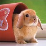 Ravensburger-15223 Jigsaw Puzzle - 500 Pieces - Square - Cute Little Bunny