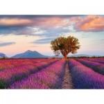 Puzzle  Ravensburger-16724 Lavender Field