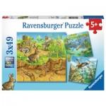 3 Puzzles - Animals in their Habitats