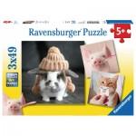 3 Puzzles - Funny Animal Portraits