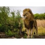 Puzzle   Nature Edition No 14 - Lion