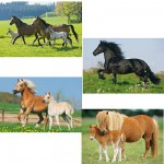 Schmidt-Spiele-55588 Jigsaw Puzzle - 26 and 48 Pieces - 4 in 1 - Horses