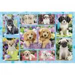 Puzzle  Schmidt-Spiele-56162 Puppies