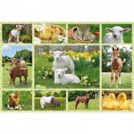Puzzle  Schmidt-Spiele-56194 Babies Animals of the Farm