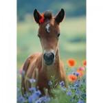 Puzzle  Schmidt-Spiele-56196 My Dear Foal