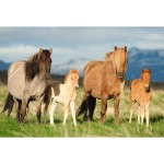 Puzzle  Schmidt-Spiele-56199 Horse Family
