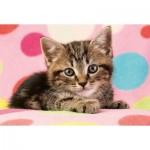 Puzzle  Schmidt-Spiele-56249 Sweet Cat