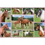 Puzzle  Schmidt-Spiele-56269 Horse Dreams