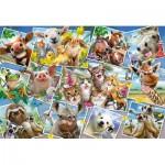 Puzzle  Schmidt-Spiele-56294 Animal Selfies