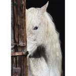 Puzzle  Schmidt-Spiele-58278 Horse Beauty