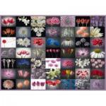 Puzzle  Schmidt-Spiele-58297 Flower Greeting