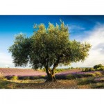 Puzzle  Schmidt-Spiele-58357 Olive Tree in Provence