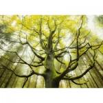 Puzzle  Schmidt-Spiele-59669 Stefan Hefele - Dream Tree