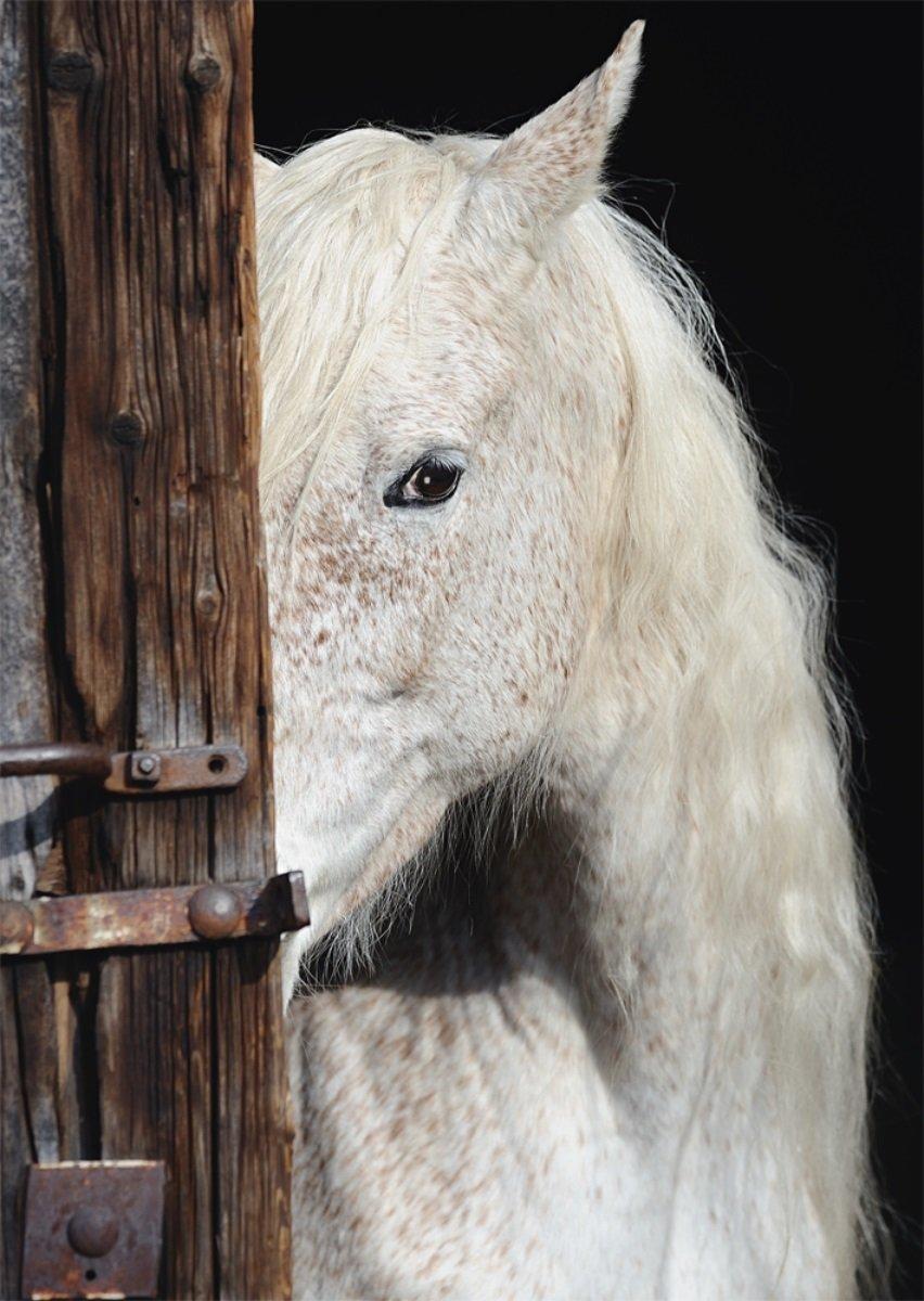 Image Result For Baby Margarehta Seksi Shoot Beauty Horse