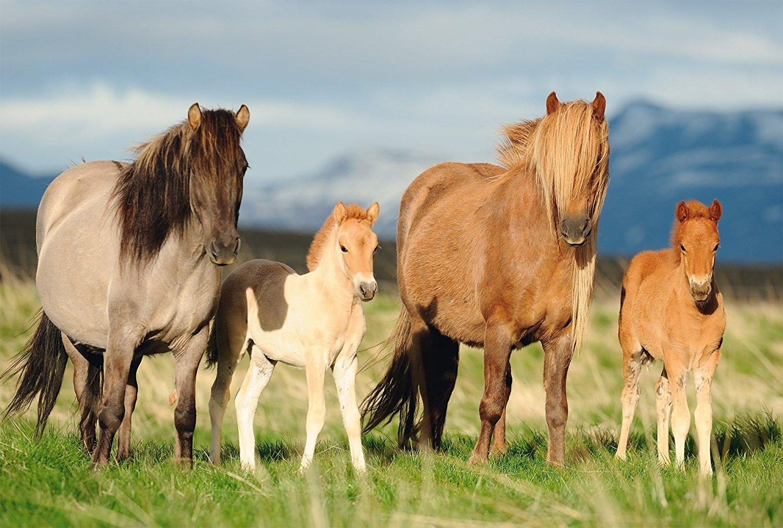 spiele pony