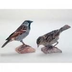 Puzzle  Schreiber-Bogen-A48 Cardboard model: House Sparrow