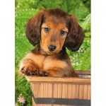 Puzzle  Step-Puzzle-77010-05 Puppy