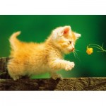 Puzzle  Step-Puzzle-77010-08 Kitten