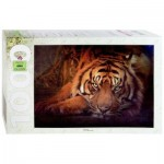 Puzzle  Step-Puzzle-79142 Siberian tiger