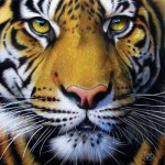 Puzzle  Sunsout-58628 Jurek - Golden Tiger Face