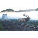 Puzzle   Dan Christ - Elk Tracks