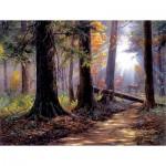 Puzzle   Jack Paluh - Peaceful Path