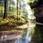 Puzzle   Quiet Forest