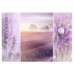 Puzzle  Trefl-10411 Lavender fields