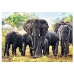 Puzzle  Trefl-10442 African Elephants
