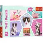 Puzzle  Trefl-13247 Cats