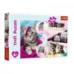 Puzzle  Trefl-15371 Kittens