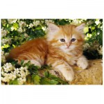 Puzzle  Trefl-19426 Redhead kitten in the flowers