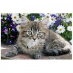Puzzle  Trefl-19427 Tabby kitten in the flowers