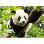 Trefl-37142 Jigsaw Puzzle - 500 Pieces - Giant Panda
