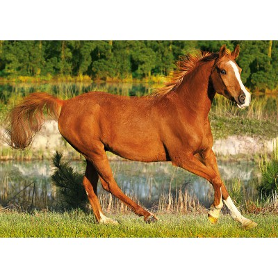 Puzzle Trefl-37184 Galloping horse